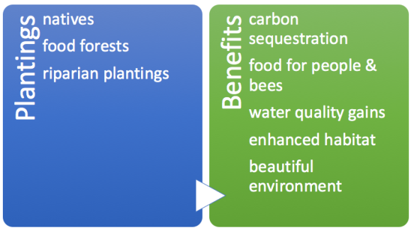 plantings benefits